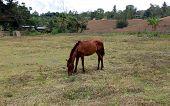 Thin Brown Horse