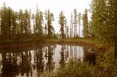 Постер, плакат: Forest Lake Smooth As A Mirror Of Water