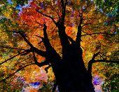 Herfst Tree