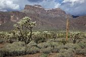 picture of superstition mountains  - The Superstition Mountains with a rare dusting of snow and a variety of cacti in the foreground - JPG