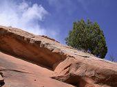 Rock, Tree, Sky