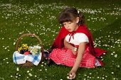Little red riding hood picking daisies in the grass