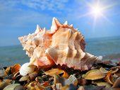 Sea shell on the coast