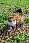 fluffy cat on the flowers poster