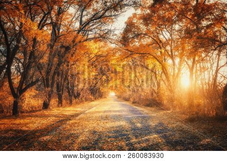 poster of Autumn Forest With Country Road At Sunset. Trees In Fall