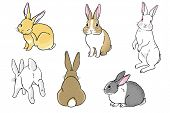 image of thumper  - Easter Bunnies - JPG