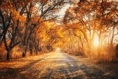 Autumn Forest With Country Road At Sunset. Trees In Fall poster