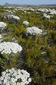 Flower beds in the Eastern Cape