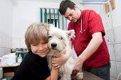 Niño sosteniendo su Westie mientras el veterinario se apresta a dar una vacuna