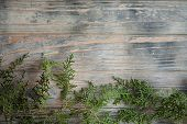 Cedar Pine Or Juniper Brunches On Distressed Rough Grey Wooden Background. Flora Nature And Botany.  poster