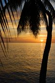 Tropical Sundown