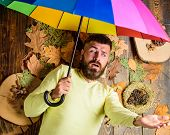 Man Bearded Lay On Wooden Background With Leaves Top View. Hipster With Beard Mustache Expect Rainy  poster