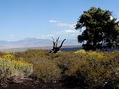 Vista From Craters Of The Moon National Monument