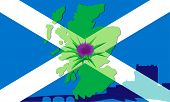 picture of scottish thistle  - Thistle flower on a background silhouette maps of Scotland and the Scottish flag - JPG