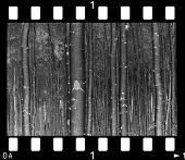 old monochrome negative (my work )