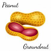 Peanut, Groundnut In Vector. Vector Illustration Of Peanut In A Nutshell. poster