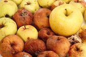maçãs podres