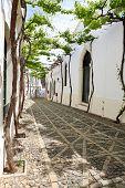 Viñas viejas en la estrecha calle blanca de Andalucía Español