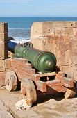 Cannon and cat in the fortress in Essaouira, Morocco