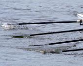 Rowing Oars