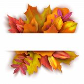 Autumn Background With Forest Fall Leaves. October Holiday Nature Vector Banner Design. Illustration poster