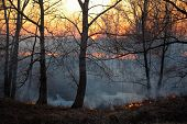 stock photo of novosibirsk  - Fire in siberian forest near Novosibirsk Russia - JPG
