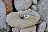 Seabird Skull At Stone Beach