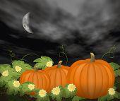 Moon Over Pumpkin Patch