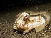 Coconut Octopus in a broken whisky bottle.