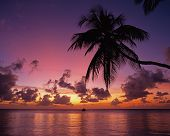 stock photo of west indies  - Palm Tree silouetted agains a sunset with a boat in the bay Pigeon Point Tobago Trinidad  - JPG