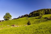 pic of feedlot  - farming Landscape with blue sky in summer time - JPG
