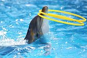 dolphin with hula hoops