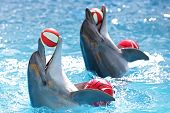 stock photo of animal nose  - two cheerful dolphin playing with a ball - JPG