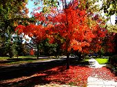 picture of boise  - Boise is set ablaze in brilliant shades of orange with the arrival of Autumn - JPG