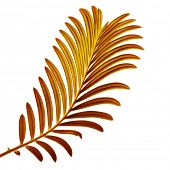 Farbige Palm-Leaf, isolated on white background