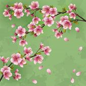Vintage Background With Japanese Cherry Tree Sakura