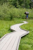 Wooden Path In Swamp