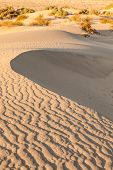 foto of mesquite  - Sand dunes of Mesquite Flat in Death Valley Desert  - JPG