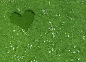 Heart Shape Made Of Mowed Grass And Flowers