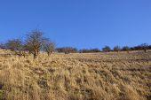 Dry Grass Landscape