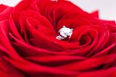 Diamond Engagement Ring In The Heart Of A Red Rose