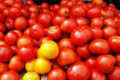 Yellow and red tomatoes.