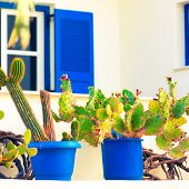 cactus and windows with blue shutters