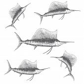 pic of sailfish  - Hand drawn vector illustration of a sailfish - JPG