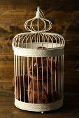 Toy bear in decorative cage  on wooden background