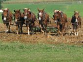 stock photo of horse plowing  - Work team of horses pulling a plow on a farm field taken in an Amish area in Pennsylvania - JPG