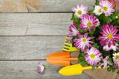Potted flower and garden utensils on wooden table background with copy space