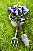 Flowers and gardening tools over green grass background.