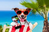 stock photo of sunbathing  - dog taking a selfie in summer holidays - JPG