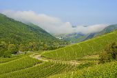 pic of moselle  - An image looking down across vineyards of the Moselle Valley in Germany with a small village in the distance along with castle ruins